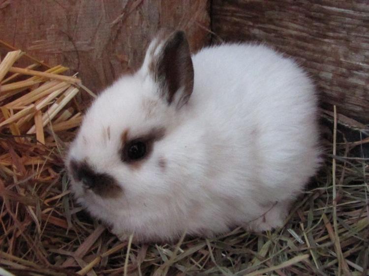 Rabbits (232)